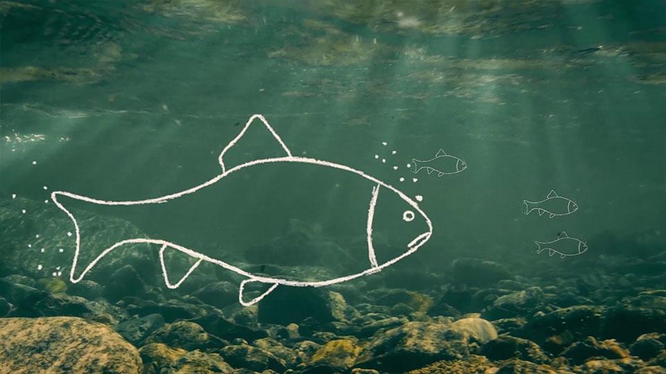 Aus dem NABU BW Imagefilm - Outline-Fische unter Wasser